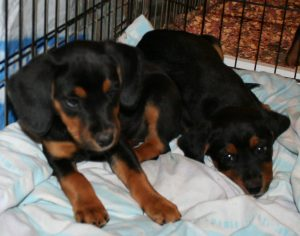 5 puppies 3