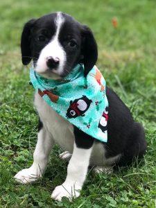 Allison puppy 2a