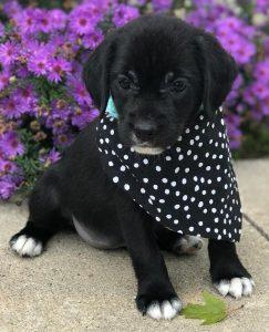 Allison puppy 3a