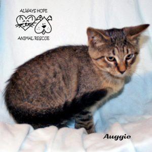Auggie-1