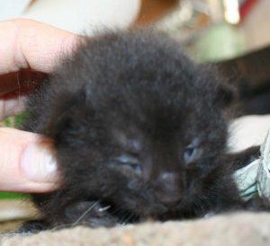 Candy kitten2 3_14