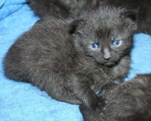 Candys kittens 3_22