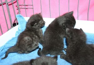 Candys kittens 3_22 A