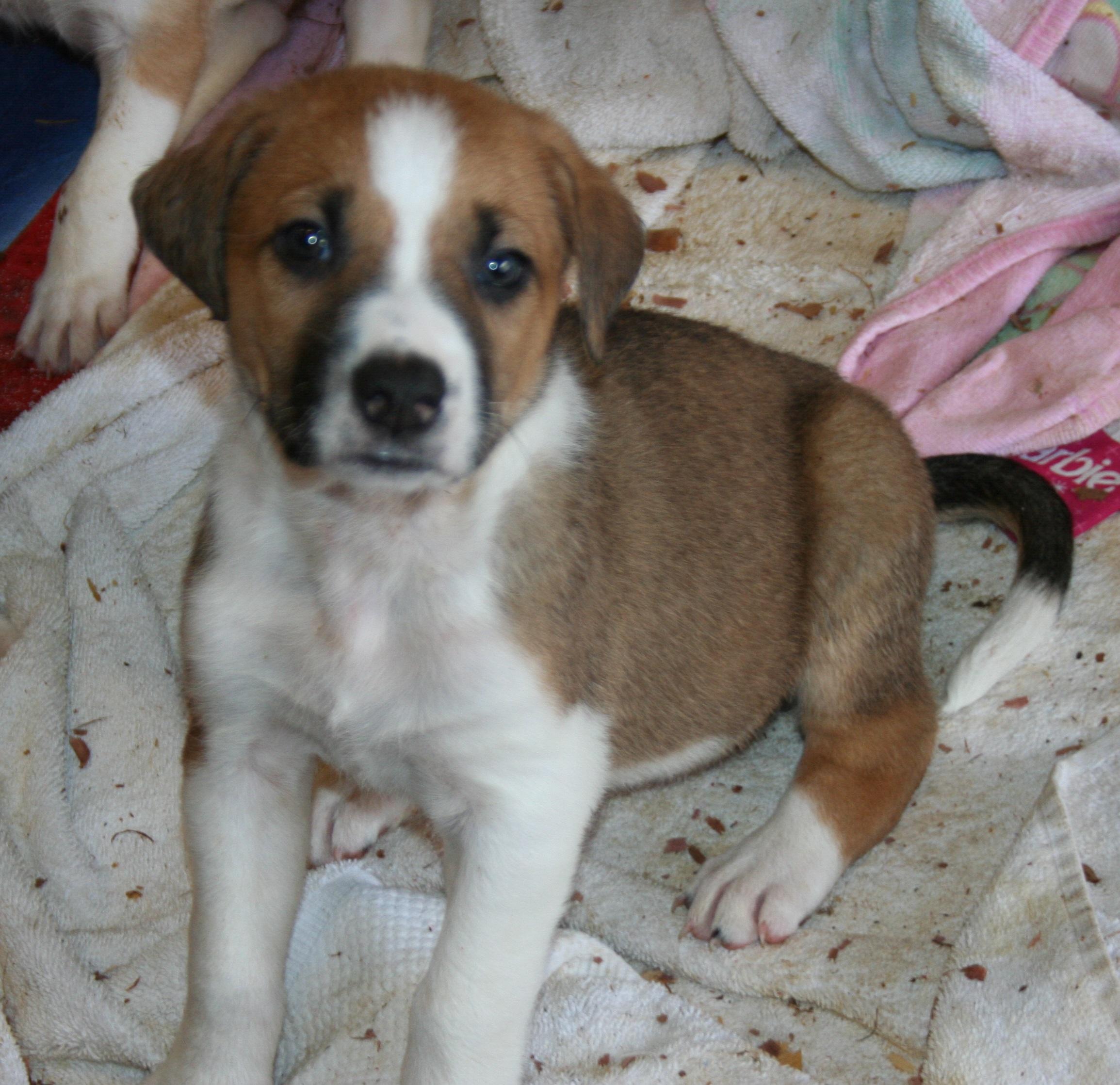 Gracie pup 1
