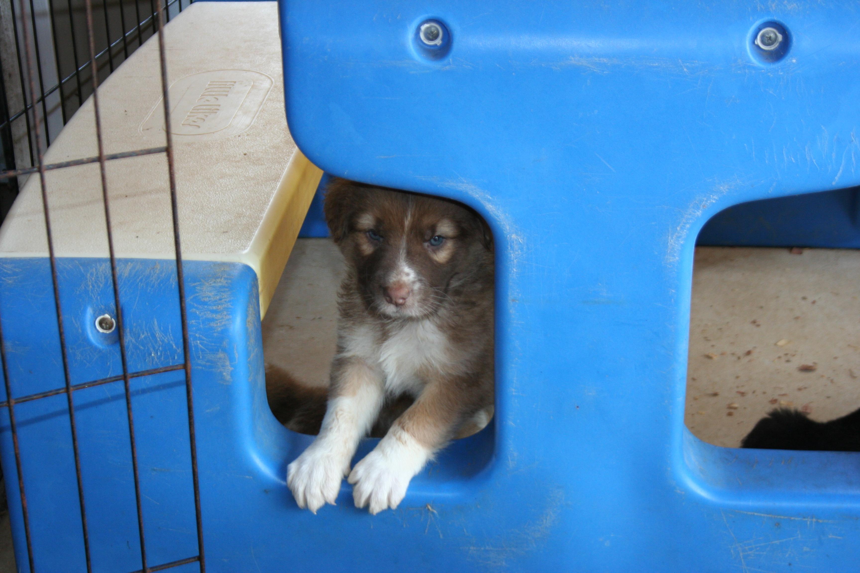 Gracie pup 3