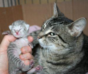 Spring kitten 3