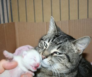 Spring kitten 4