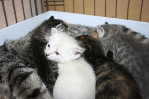 Spring kittens 2