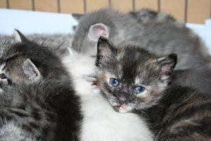 Spring kittens 4