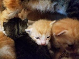 kittenpile