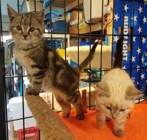 kittensbodies