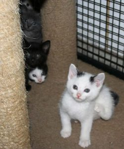 new kittens 1