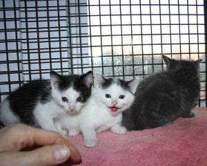 new kittens 2